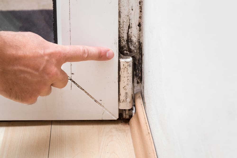 mold-remediation-services - The Steamery